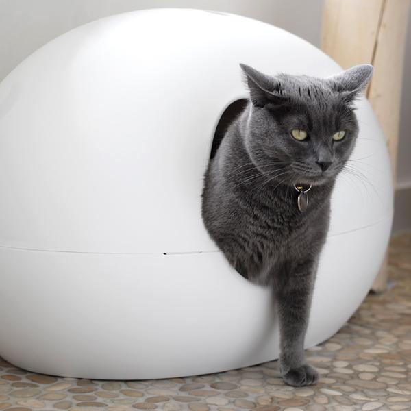 Photo de chat à la clinique vétérinaire