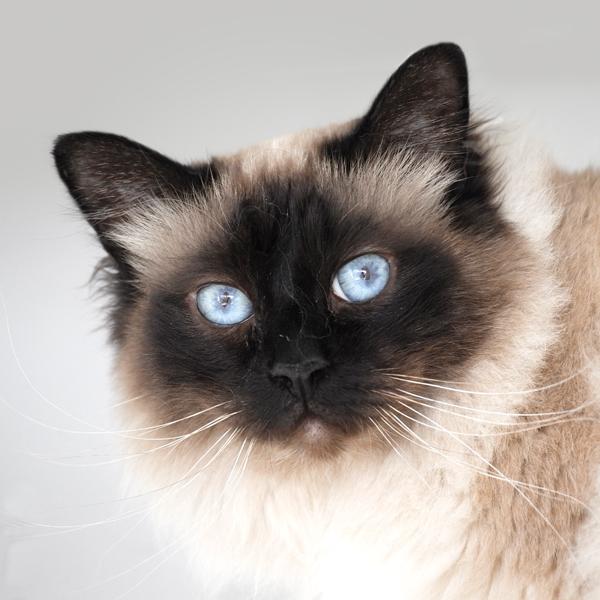 Photo de chat en pension